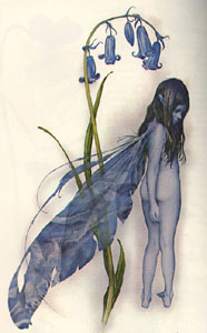 froud-bluefaery.jpg